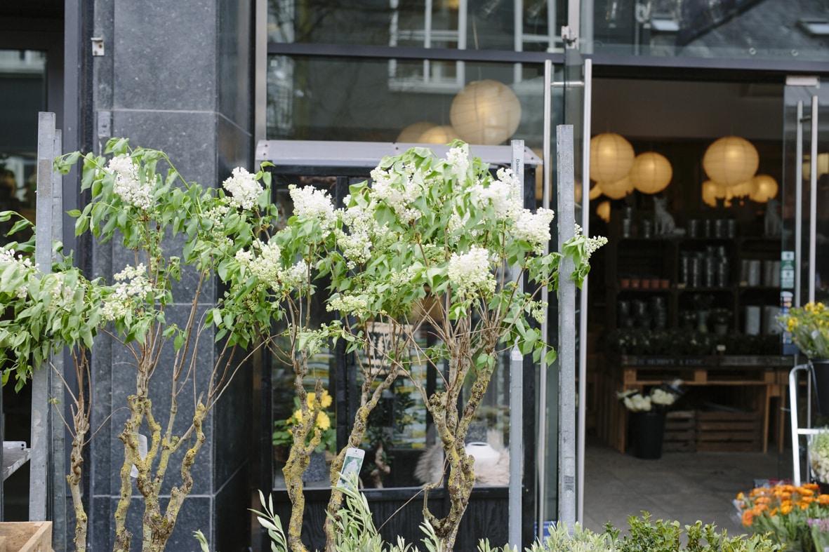 Hustandens Lagersalg i Silkeborg. Butikschef Daniel Foged Brenøe har åbnet en butik med planter og interior og kalder det for en unik indkøbsoplevelse i Silkeborg.