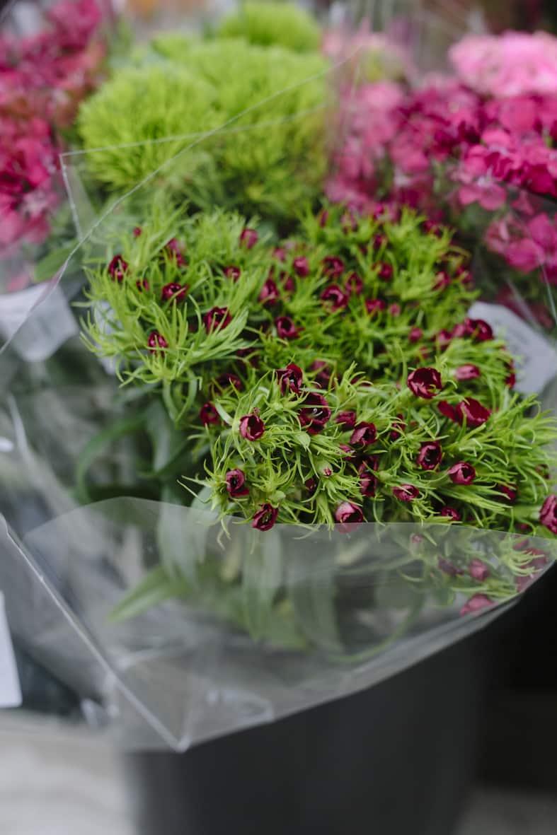 Hustandens Lagersalg i Silkeborg. Butikschef Daniel Foged Brenøe har åbnet en butik med planter og interior og kalder det for en unik indkøbsoplevelse iSilkeborg.