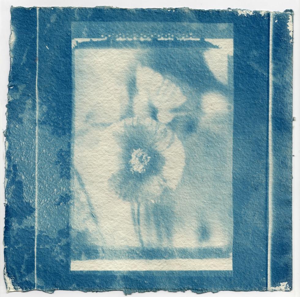 cyanotopi, sun print, blue print